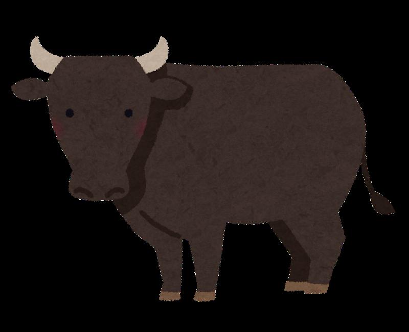 輸入牛のもも肉、肩ロースのカロリー 和牛のもも肉、肩ロースのカロリーは?