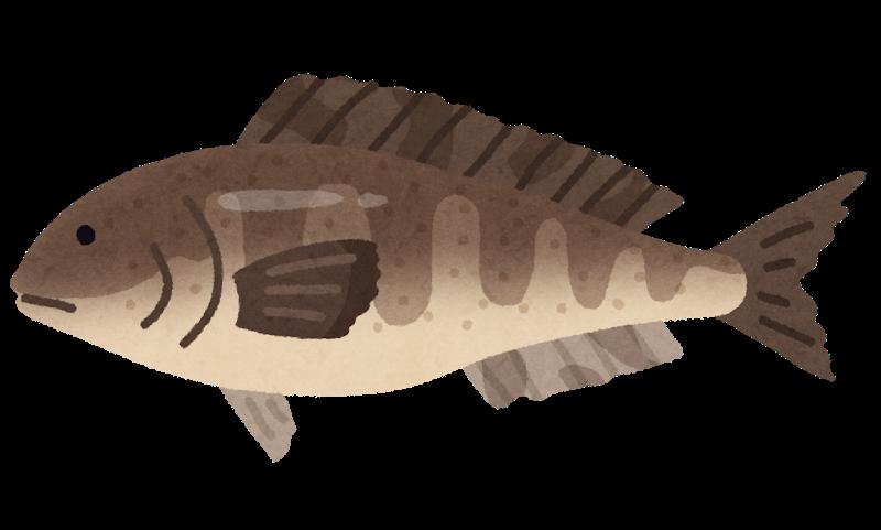 ところで、ホッケってどんな魚なんでしょう??